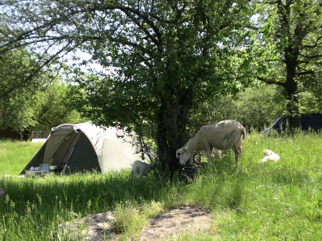 Le camping camping et g te de la ferme en paille l for Camping au jardin de la ferme